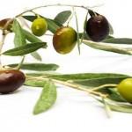 Dầu oliu có tác dụng ngăn ngừa bệnh tim mạch cực tốt cho phụ nữ