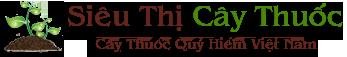 Siêu Thị Cây Thuốc – Cây Thuốc Quý Hiếm – Cây Thuốc Quý Việt Nam